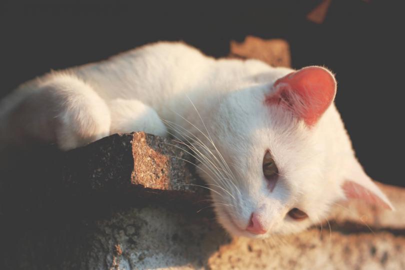 Macskatartás terhesen
