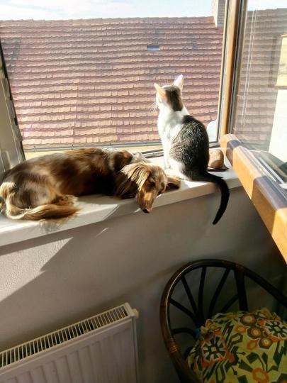 Hogyan szoktassuk össze macskánkat új állattal