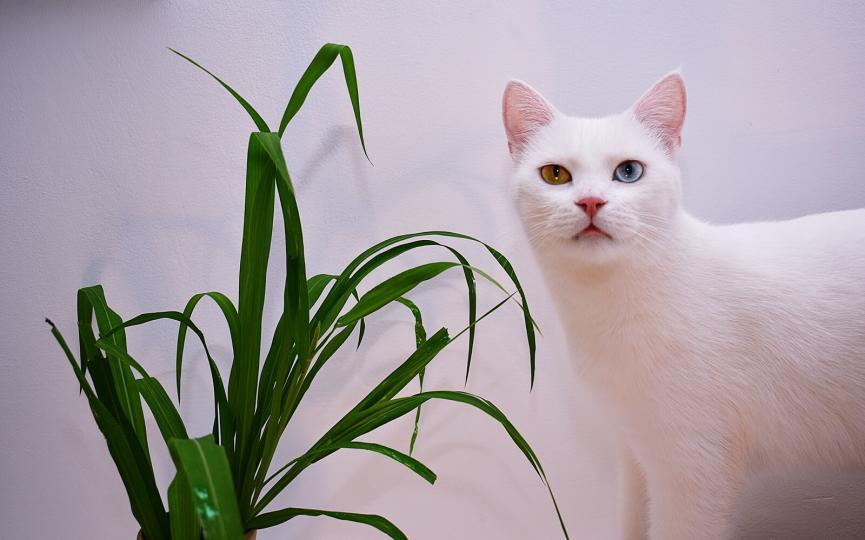 Macskatartás - Minden amit tudnod kell
