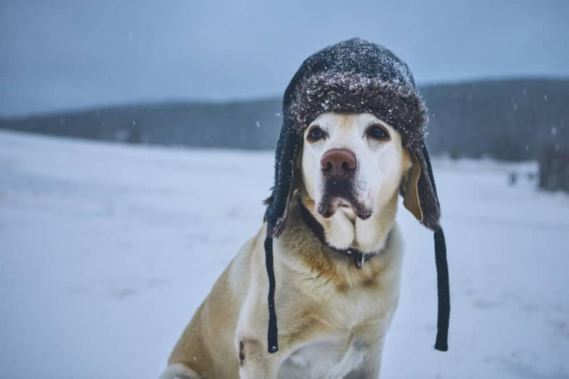 Kutyahideg: Védd a kutyád a hideg téltől
