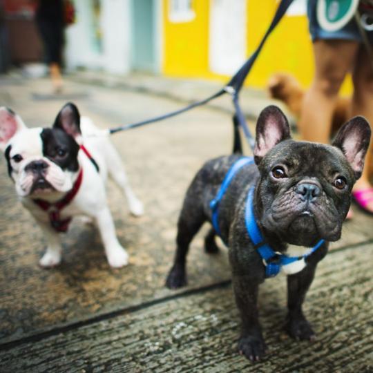 Hasznos kellékek az esti kutyasétáltatáshoz