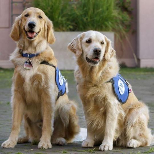 Terápiás kutyusok, akik segítenek testi és lelki panaszok esetén is