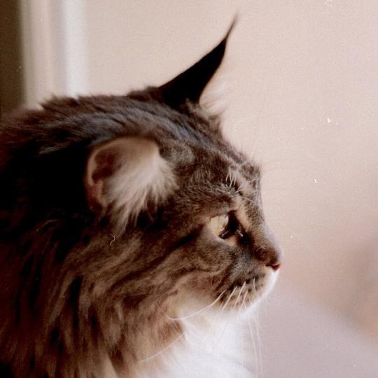 Kiengedjem e macskámat? Kijárós macska vagy szoba cica legyen e?