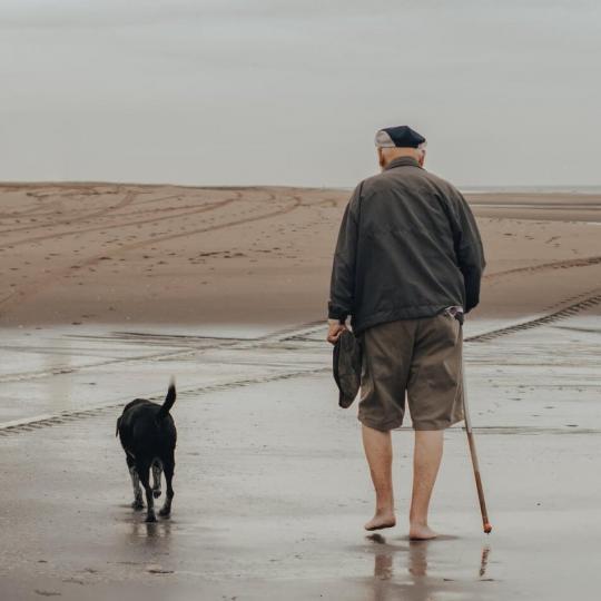 Idős kutya betegségek