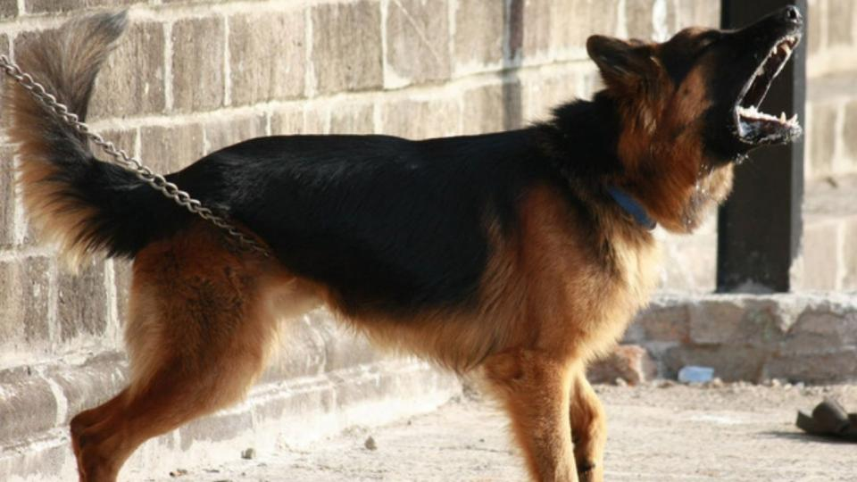 Agresszív kutya kezelése