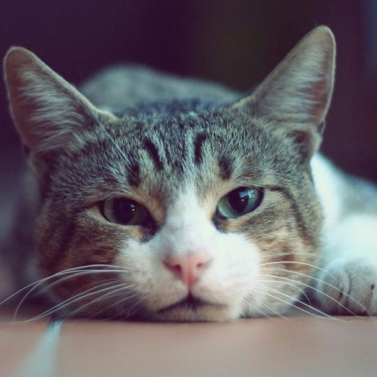 FELIWAY párologtatóval a macskák nyugalmáért