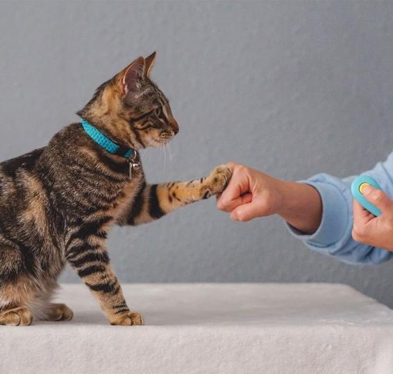 Mennyire tanítható a macska?