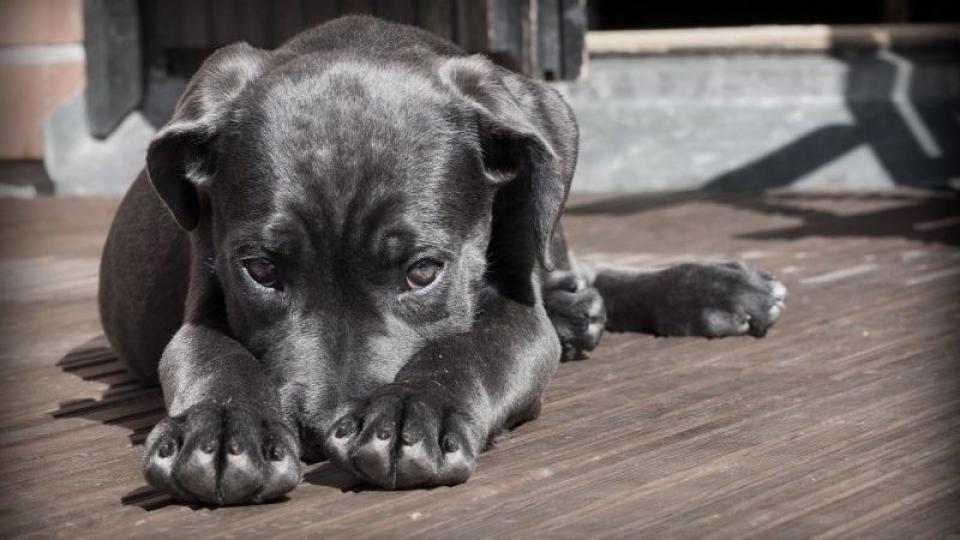 Stresszes kutya