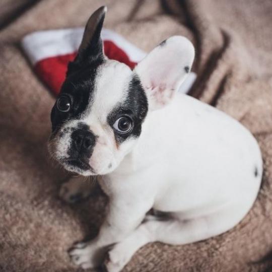 Kutya ivartalanítás