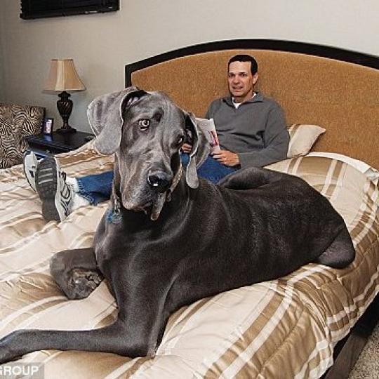 Guinness Rekorder kutyák