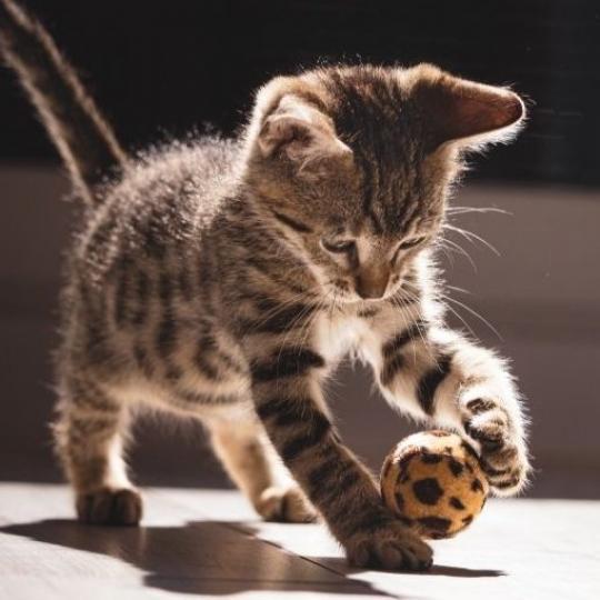 Mit tanulhatunk cicánktól?