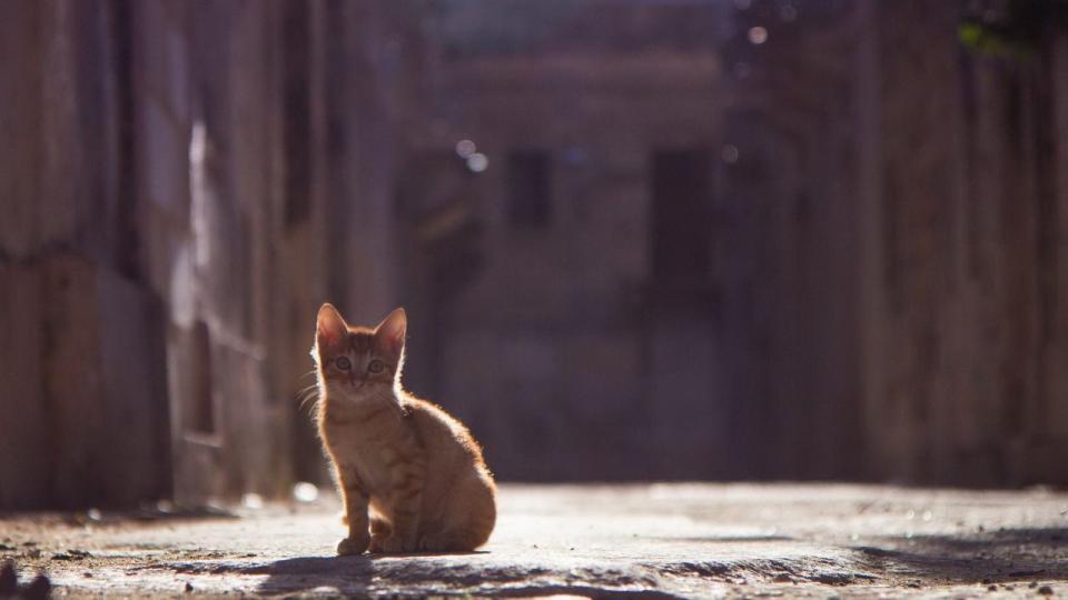 Mit tegyünk akkor, ha kiscicát találunk?