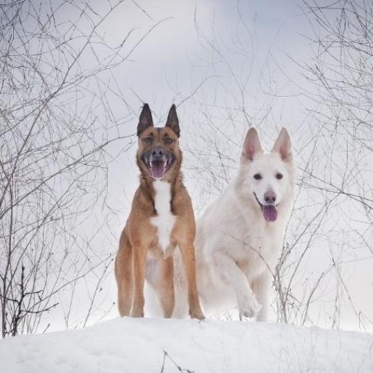 Kutyasétáltatás télen