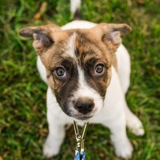 Miért fontos a kutyaiskola?