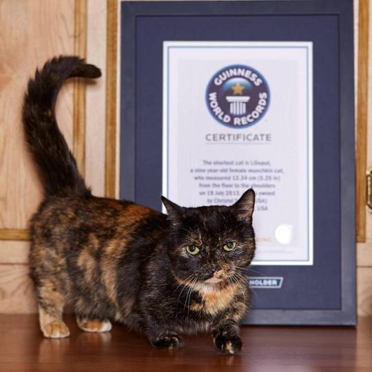 Guinness Rekorder Macskák