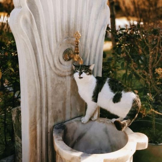 Hőguta macskáknál