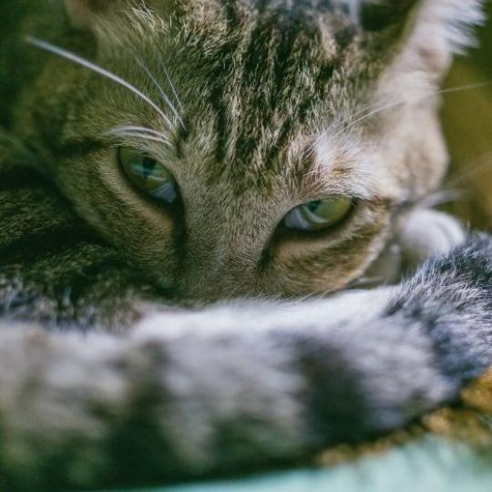 Macskák bélelzáródása