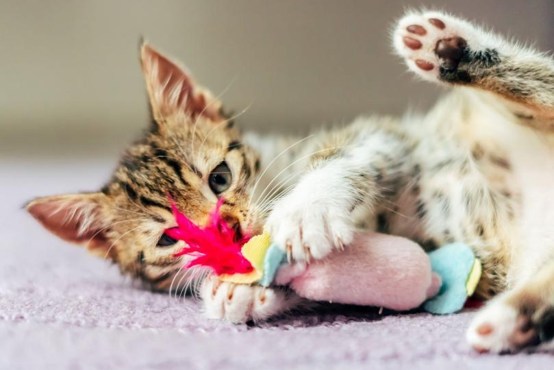 Boldog játékosság – A legjobb unaloműzők a cicádnak
