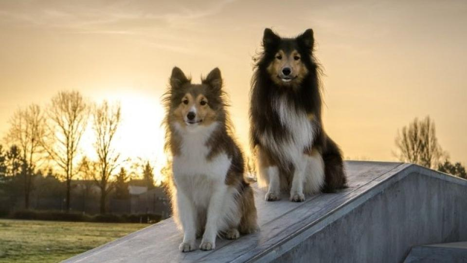 A 10 legintelligensebb kutyafajta