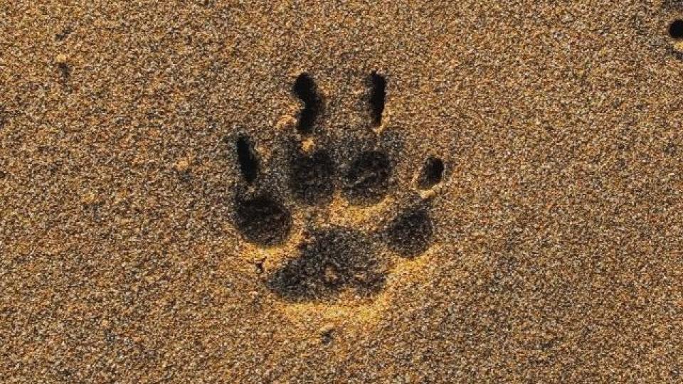 Kutya karomvágás