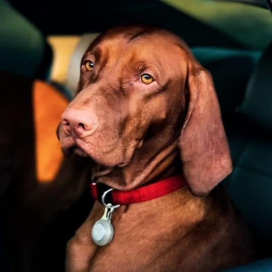 Kutyával autózás
