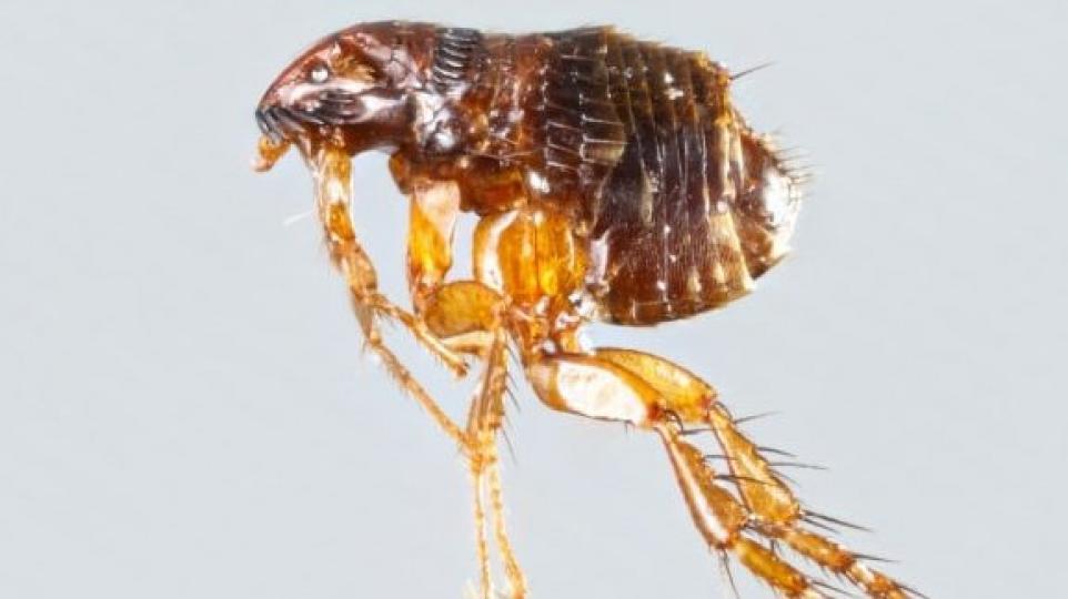 paraziták állatokban, amelyek emberre terjednek