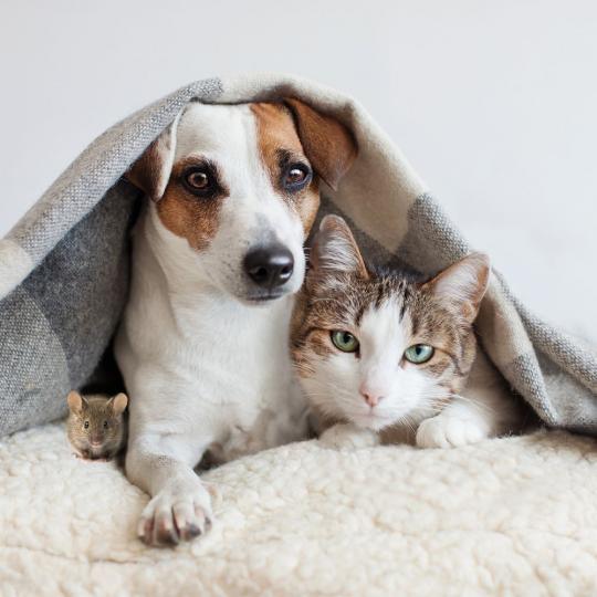 A macskák ma már nem feltétlenül magányosak, sőt a kutyák barátai is lehetnek