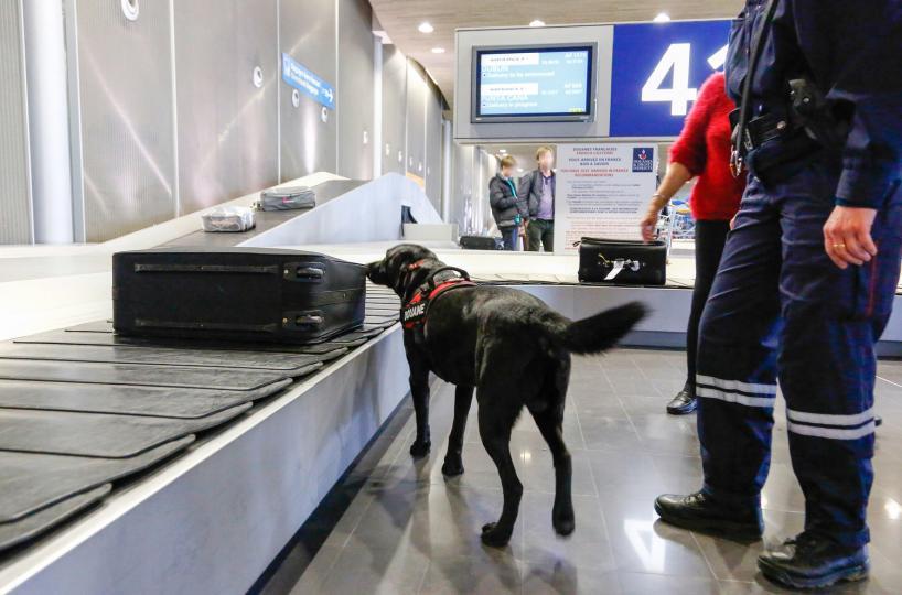 Érdekességek a drogkereső kutyákról