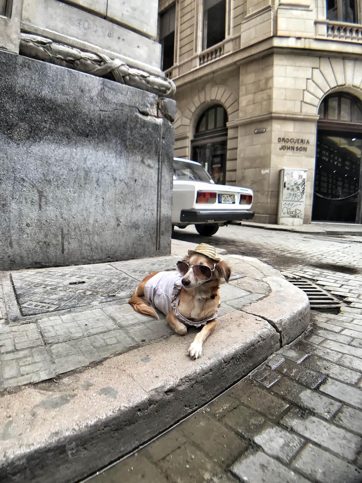 Stílusos nyugdíjas kutya