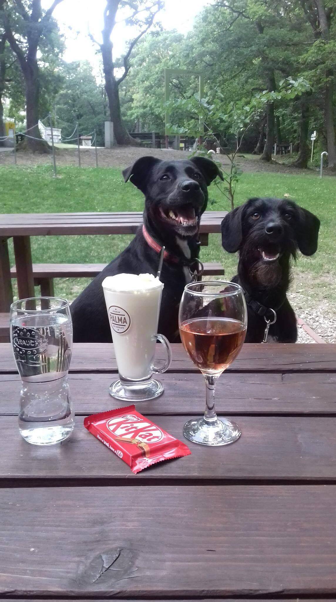 Iszogató kutyák