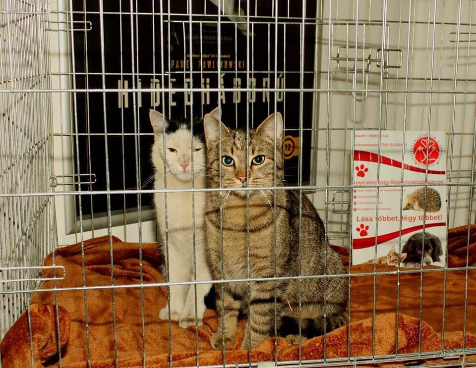 Két macska ketrecben