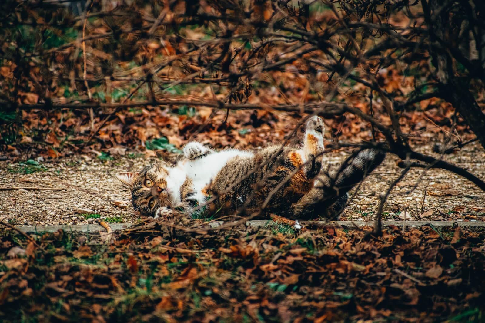 Macska a kertben