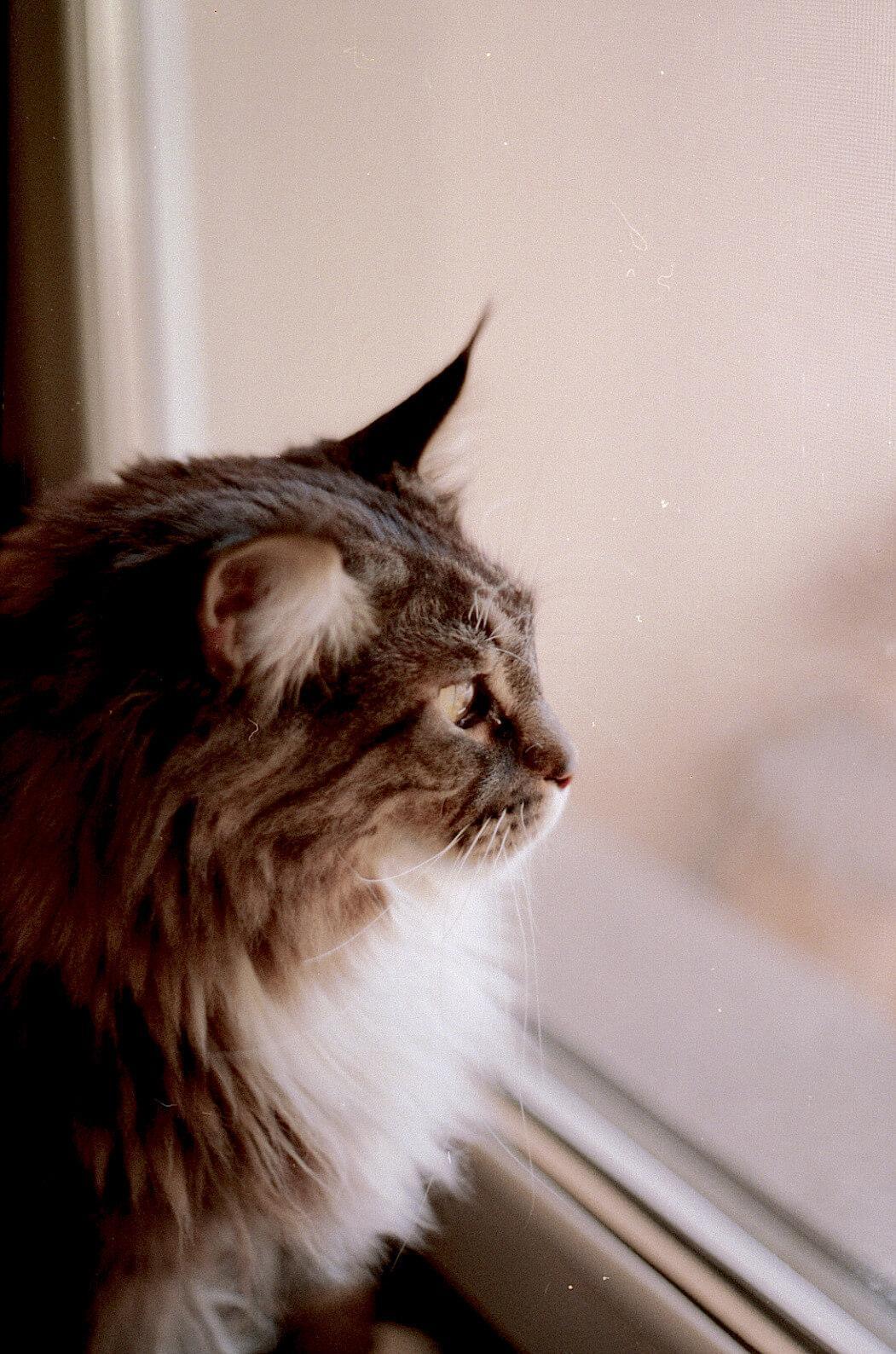 Macska az ablakban