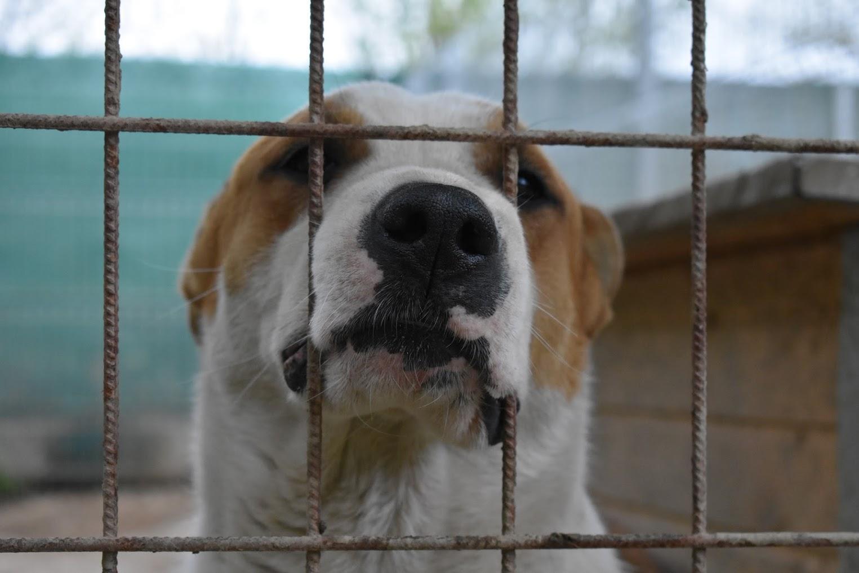 Kutya kennelben