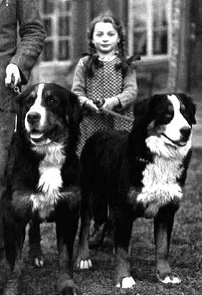 Berni pásztorkutyák kislánnyal
