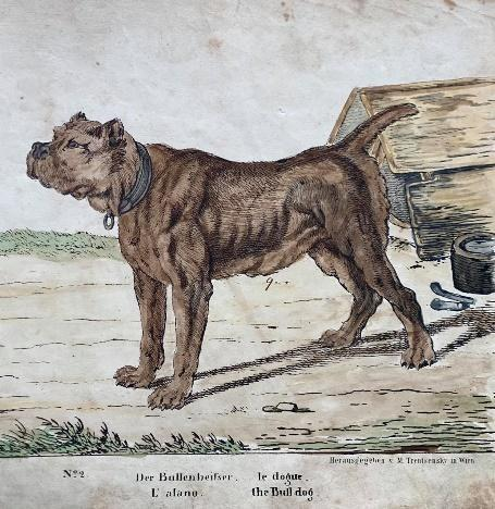 Bulldog ábrázolás 1790.