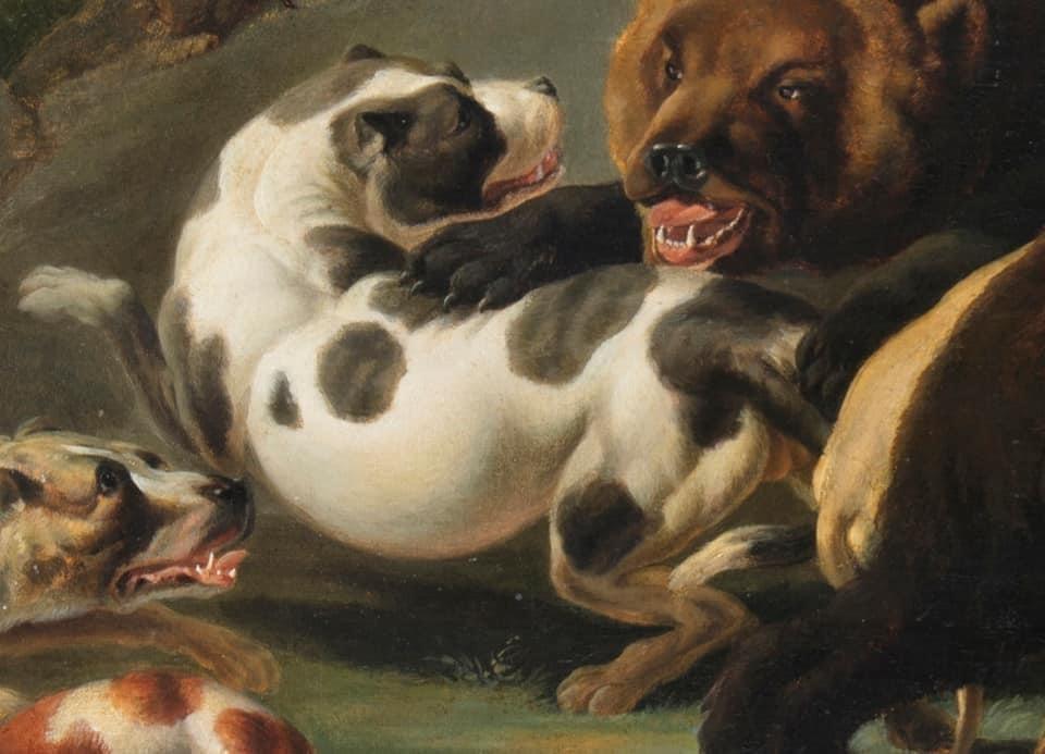 Bulldog medve harc