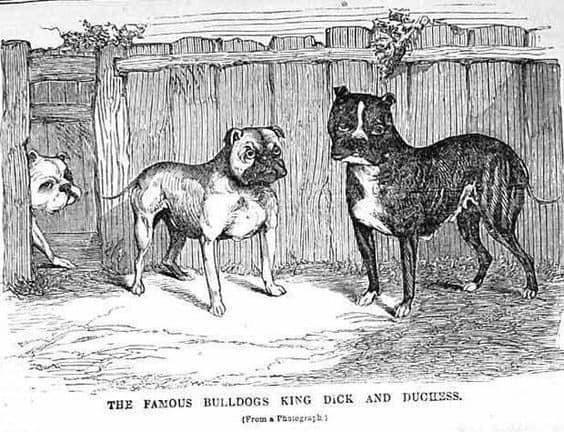 Bulldogok csoportja