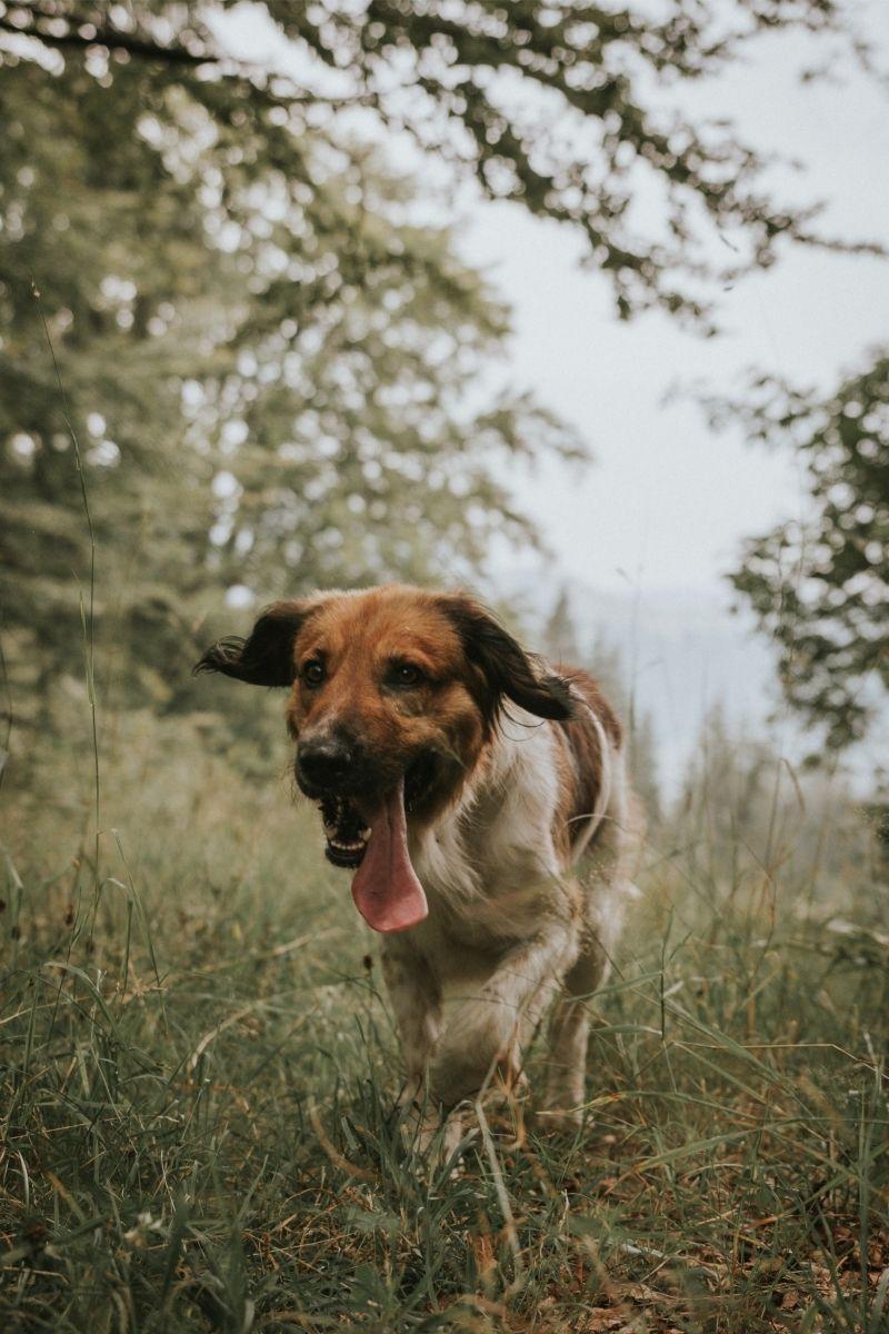 Kutya az erdőben
