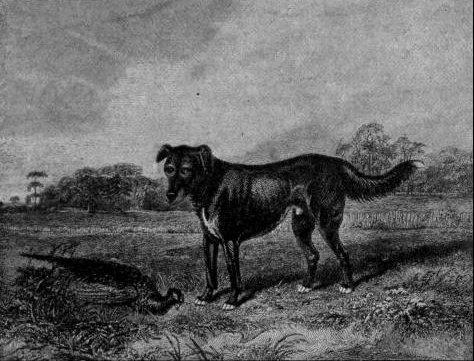 1832.-es kép Labradorról, forrás: tota.world