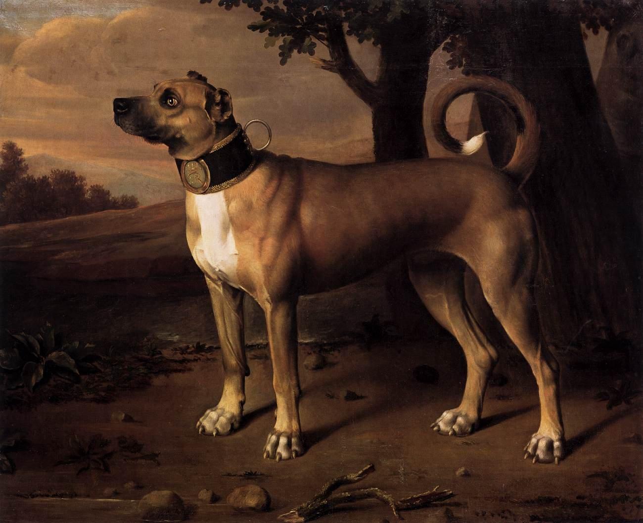 17. századi Dog_forrás_wikipedia