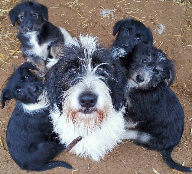 Kutya család az Élethang Alapítvány gondozásában