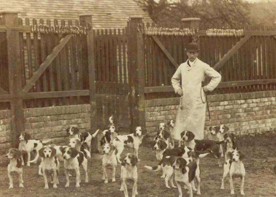 1855. kutyafalka forrás: beagles.thereaderwiki.com