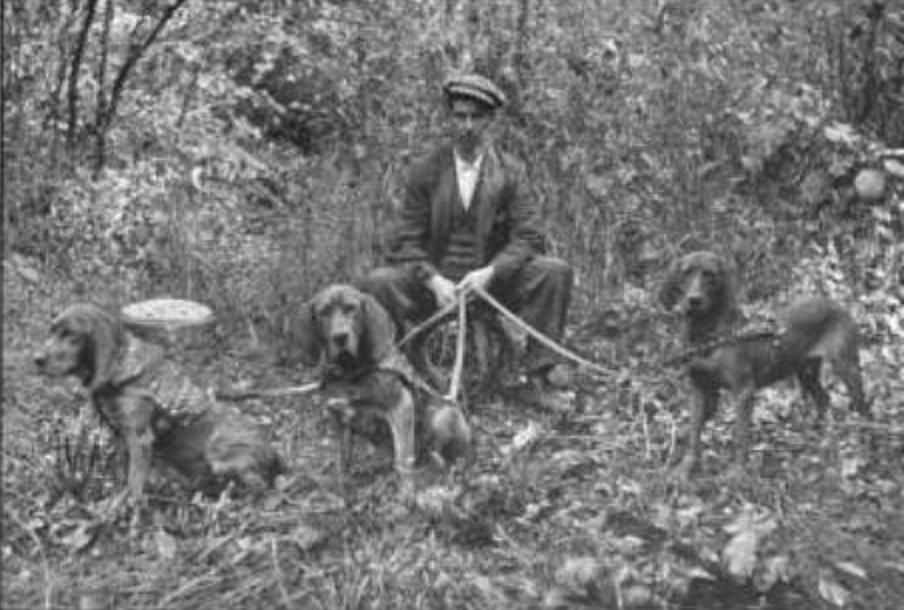 1916.-os kép Nyugat Virginiai vérebekről_forrás:retrieverman.net