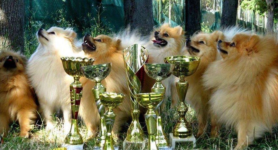 Bán-Boncida kennel díjnyertes kutyái