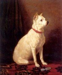 Az egykori Angol Fehér terrier, Forrás: wikipedia.org
