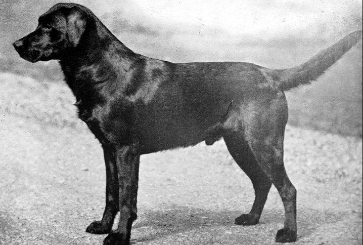 1933.-as Crufts champion kutya_forrás: Justamere Ranch LLC Facebook oldal