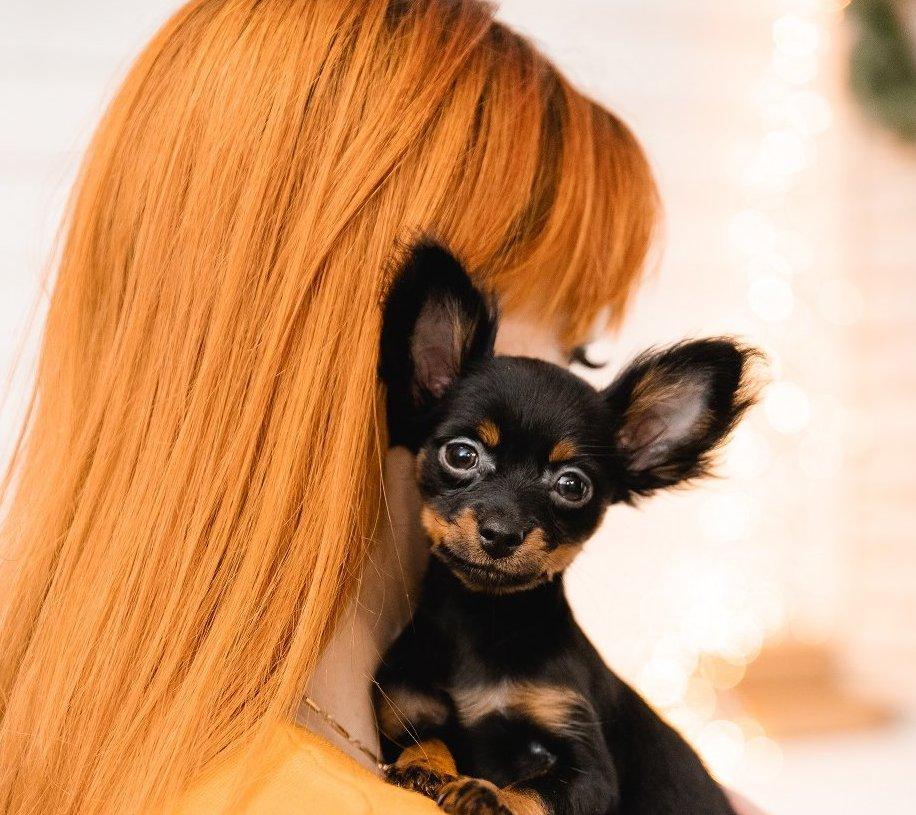 vörös hajú nő kezében kiskutyával