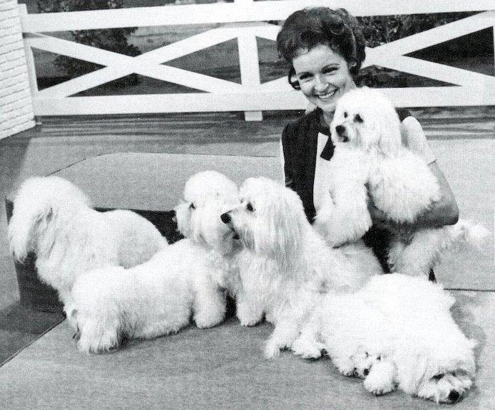 "Betty White a ""Pet Set"" tv showban a korai '70-es években_Forrás: akc.org"