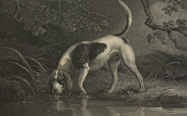 Szent Hubertus kutya